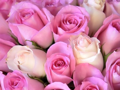 """�������  .. ����� .. sm3na season 2 .. """"���� ����"""" pink-roses.jpg"""